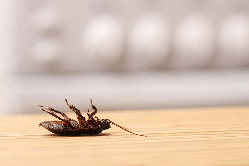 Pest Control Technician vs Licensed Exterminator