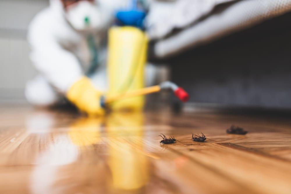 Is Pest Control A Hard Job?